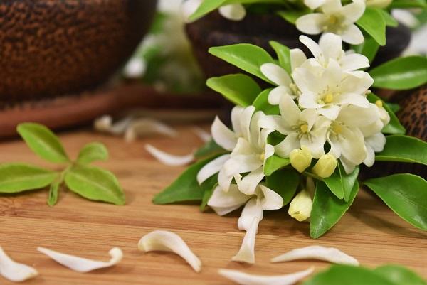 Subtelne, białe płatki jaśminu wydzielają aromat, który już od setek lat inspiruje perfumiarzy i zachwyca noszące go kobiety. J