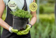 iglaki rośliny ogrodowe