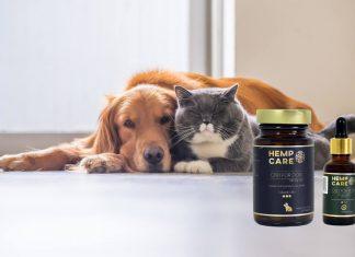 suplement dla zwierząt