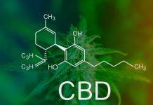 cbd kannabidiol